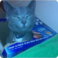 Adopt A Pet :: Stewie - Lake Charles, LA