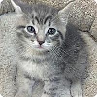 Adopt A Pet :: Sunny - Chandler, AZ