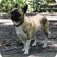 Adopt A Pet :: NORMAN - Brooksville, FL