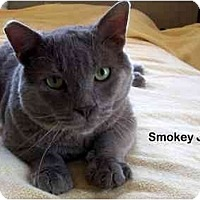 Adopt A Pet :: Smokey Joe - Portland, OR