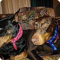 Adopt A Pet :: Katie - Allegan, MI