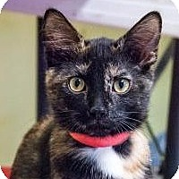 Adopt A Pet :: Brielle - Byron Center, MI