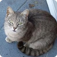 Adopt A Pet :: Chia Lot o' Love! - Brooklyn, NY
