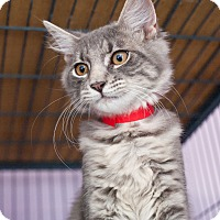 Adopt A Pet :: Einstein - Shelton, WA