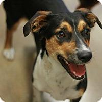 Adopt A Pet :: Sicily - Canoga Park, CA