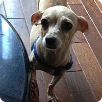 Adopt A Pet :: Bug - Charlotte, NC