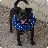 Adopt A Pet :: Coco - Richmond, VA