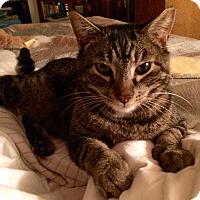 Adopt A Pet :: Raya - Novato, CA
