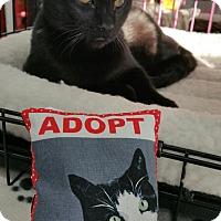 Adopt A Pet :: Cisco - Nuevo, CA