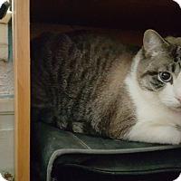 Adopt A Pet :: Kenji - Battle Creek, MI