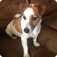 Adopt A Pet :: Wanda in San Antonio - San Antonio, TX