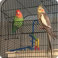 Adopt A Pet :: Skittles and Waltina - staten Island, NY