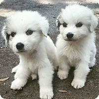 Adopt A Pet :: ARIEL and SEBASTIAN - Parsippany, NJ