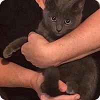 Adopt A Pet :: Duncan - Toronto, ON