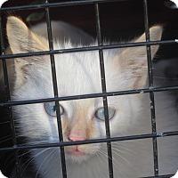Adopt A Pet :: Max - Newtown, CT