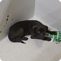 Adopt A Pet :: A31 Mason - Odessa, TX