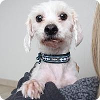 Adopt A Pet :: Freddie Banana D161844 - Edina, MN