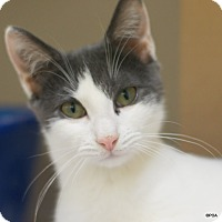 Adopt A Pet :: Titus - East Hartford, CT