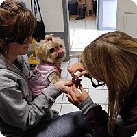 Adopt A Pet :: Lulu - Big Spring, TX
