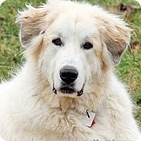 Adopt A Pet :: Baloo - pending - Beacon, NY