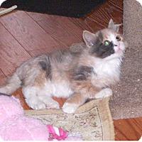 Adopt A Pet :: Tic Tac (Cali) - Toronto, ON