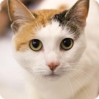 Adopt A Pet :: ALEXANDRA - Pt. Richmond, CA