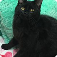 Adopt A Pet :: Nina - Pasadena, TX