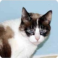 Adopt A Pet :: Ginny - Bonita Springs, FL