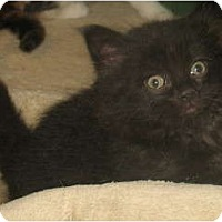 Adopt A Pet :: Farley - Acme, PA