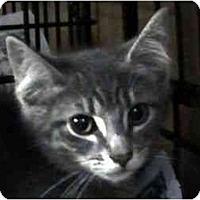 Adopt A Pet :: Aragon - Syracuse, NY