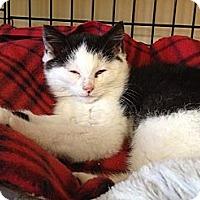 Adopt A Pet :: Rosie - Island Park, NY