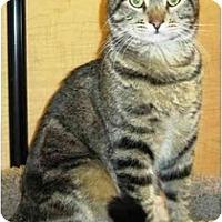 Adopt A Pet :: Oliver - Irvine, CA