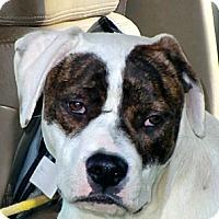 Adopt A Pet :: Ben! - Sacramento, CA
