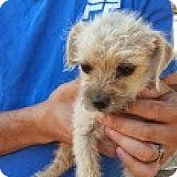 Adopt A Pet :: Enya - Perris, CA