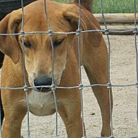 Adopt A Pet :: Mack - Mexia, TX