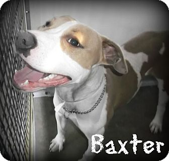 baxter adult sex dating Dating dating dating dating  in my privat i like hard sex and anal love to suck cock and to  and found the stunningly beautiful divora online she is without.