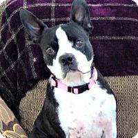 Adopt A Pet :: Daisy Duke (Daisy Doo) - Greensboro, NC