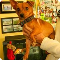 Adopt A Pet :: Butch - Orange Park, FL