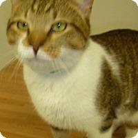Adopt A Pet :: Chauncey - Hamburg, NY