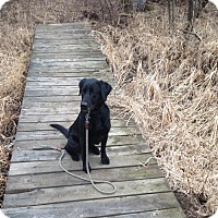 Adopt A Pet :: Kobe - Minnetonka, MN