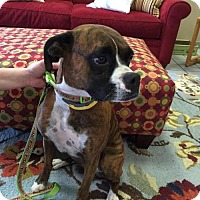 Adopt A Pet :: Dixie - Brentwood, TN
