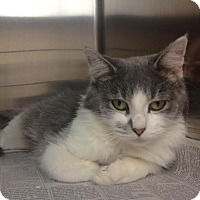 Adopt A Pet :: Cinder - East Brunswick, NJ