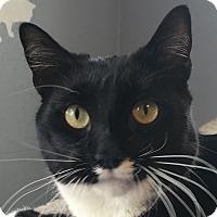 Adopt A Pet :: Elvis - Winchester, CA