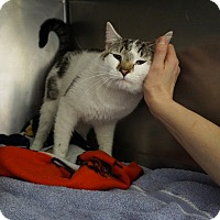 Adopt A Pet :: Oreo - Mt Vernon, NY