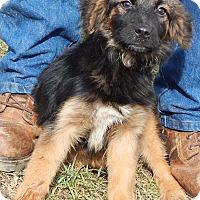 Adopt A Pet :: Shorty (15 lb) Sweetie! - Sussex, NJ