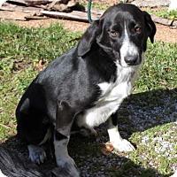 Adopt A Pet :: Lucy - Salem, NH