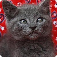 Adopt A Pet :: MJ - Little Rock, AR