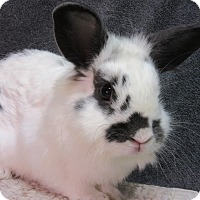Adopt A Pet :: Corbett - Newport, DE