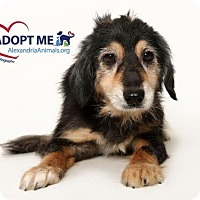 Adopt A Pet :: Chester - Alexandria, VA