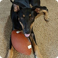 German Shepherd Dog/Rottweiler Mix Dog for adoption in Cabot, Arkansas - Jake